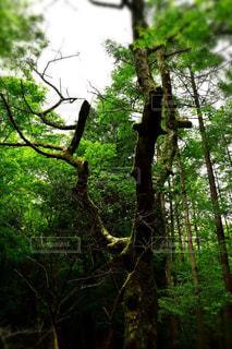 森の中の生命の写真・画像素材[3111121]