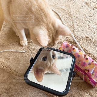 鏡を見る猫の写真・画像素材[3228870]
