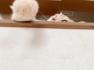 ちら猫の写真・画像素材[3234194]
