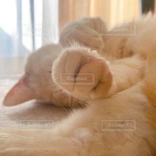 可愛い猫の写真・画像素材[4120495]