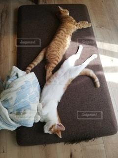 猫,子猫,びよーん