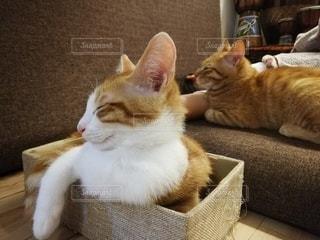 猫,屋内,子猫,まったり