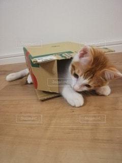猫,子猫,箱猫