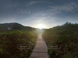 自然,風景,空,太陽,草,新緑