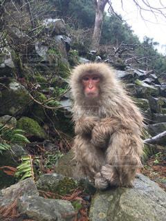 自然,猿,動物,サル