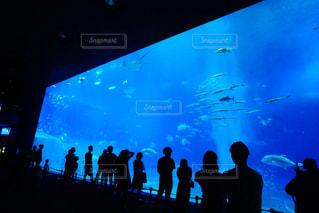 魚,屋内,水族館,泳ぐ,画面