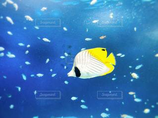 魚,黄色,水族館,泳ぐ,水中