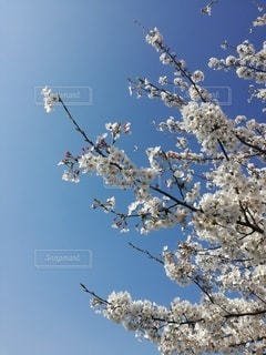 春の希望の写真・画像素材[3075179]