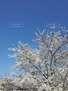 春の空の写真・画像素材[3075180]