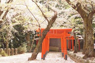 桜の絨毯の写真・画像素材[3081695]