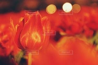愛の告白の写真・画像素材[3083547]