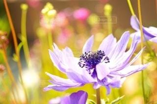 春の陽気の写真・画像素材[3083868]