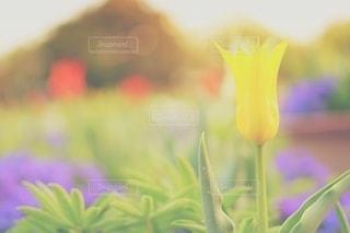 報われぬ恋の写真・画像素材[3084113]