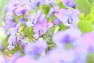 花のクローズアップの写真・画像素材[3088536]