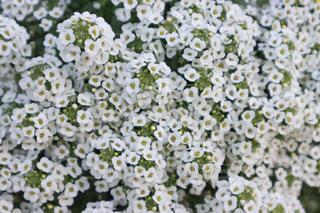 花の写真・画像素材[3130082]