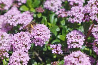花とミツバチの写真・画像素材[3132180]
