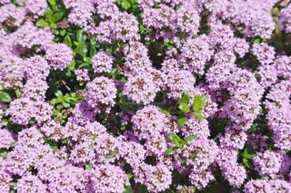 花の写真・画像素材[3132182]