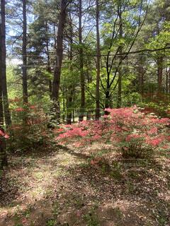 森の真ん中にある木の写真・画像素材[4421353]