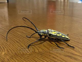 動物,屋内,黄色,テーブル,床,昆虫,灰色,カミキリムシ