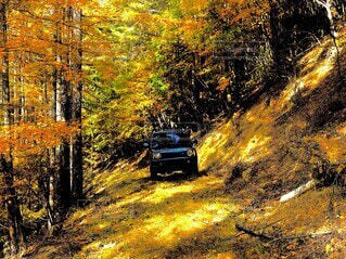 秋,屋外,車,黄色,草,樹木,林道,車両,ジムニー,陸上車両