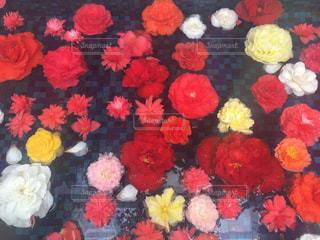 花束からのフラワーバスの写真・画像素材[3088013]