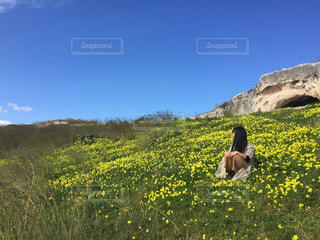 イタリア シチリアのお花畑の写真・画像素材[3092496]