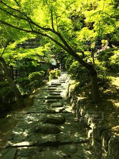 和歌山城公園の写真・画像素材[3194939]