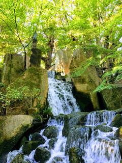名古屋徳川園の庭園の写真・画像素材[3194949]