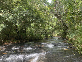 森を流れる川の写真・画像素材[3194992]