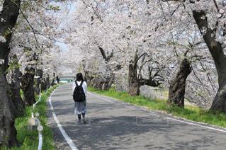 桜との対話の写真・画像素材[3091393]