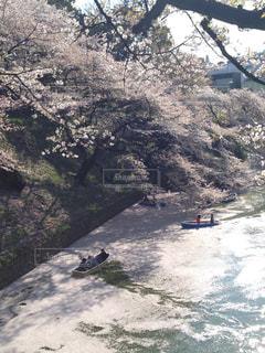 桜散るの写真・画像素材[3091415]