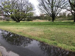 雨上がりの写真・画像素材[3113886]