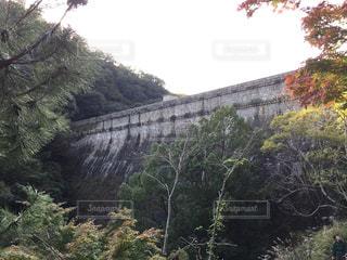 森の近くで列車の線路を下って移動する列車の写真・画像素材[3125837]