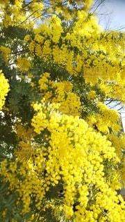 黄色い花の写真・画像素材[3087545]