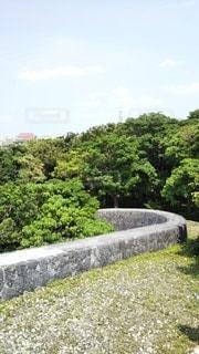 庭のクローズアップの写真・画像素材[3087582]