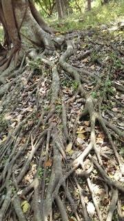 森の中の木の写真・画像素材[3088392]