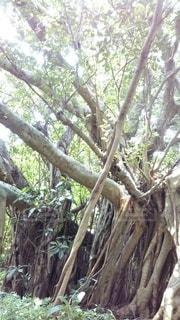 木のクローズアップの写真・画像素材[3089264]