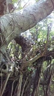 木のクローズアップの写真・画像素材[3089275]