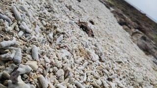 珊瑚の浜の写真・画像素材[3092660]