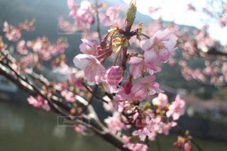 桜の咲くころの写真・画像素材[3087988]