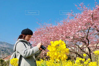 春を撮るの写真・画像素材[3090483]