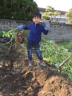 子ども,食べ物,自然,屋外,野菜,人,笑顔,土,食品,少年,畑,若い,さつまいも,食材,汚れ,草木,芋掘り,フレッシュ,とれたて,ベジタブル,いも,サツマイモ,サツマイモ掘り,いも掘り,さつまいも掘り