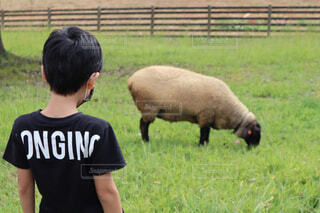 羊さんとの写真・画像素材[4600139]