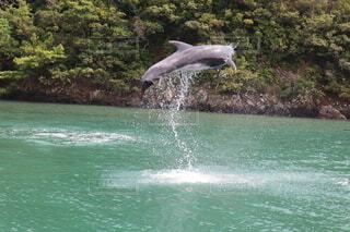 クジラのジャンプ!の写真・画像素材[4706282]