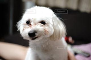 犬の写真・画像素材[123161]