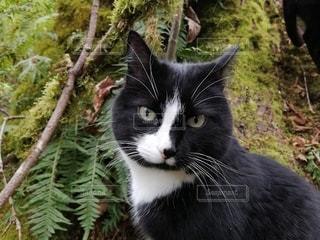 こっちを見つめる猫の写真・画像素材[3136165]