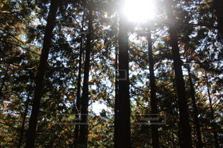 森の中の木の写真・画像素材[3091191]