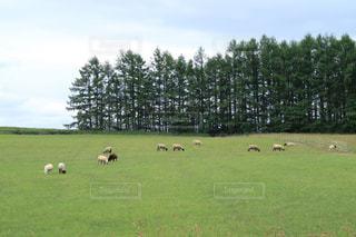 放牧の写真・画像素材[3139962]