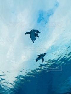空飛ぶペンギンの写真・画像素材[3101125]