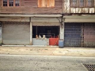 三匹の犬の写真・画像素材[3109995]